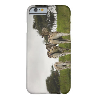 The backside of three zebras, South Africa Barely There iPhone 6 Case