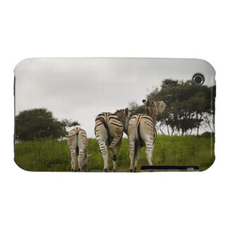 The backside of three zebras, South Africa Case-Mate iPhone 3 Case