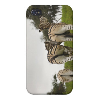 The backside of three zebras, South Africa iPhone 4 Case