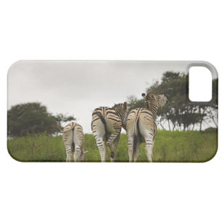 The backside of three zebras, South Africa iPhone 5 Case