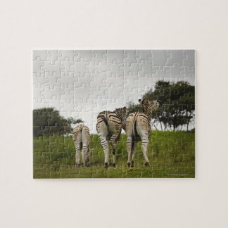 The backside of three zebras, South Africa Jigsaw Puzzle