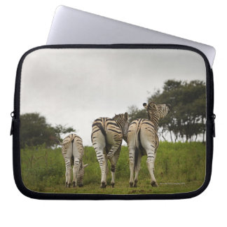 The backside of three zebras, South Africa Laptop Sleeve
