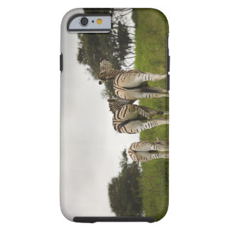 The backside of three zebras, South Africa Tough iPhone 6 Case