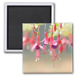 The Ballet Company .. Pink Fuchsia Flowers Magnet