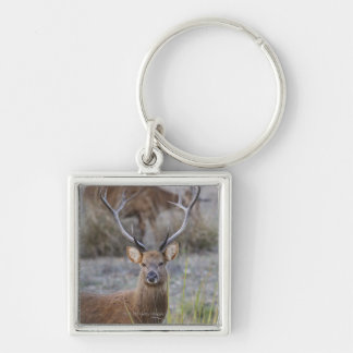The Barasingha or Barasinga (Rucervus Silver-Colored Square Key Ring