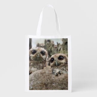 The Bare-legged Owl Or Cuban Screech Owl