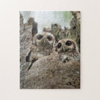 The Bare-legged Owl Or Cuban Screech Owl Puzzle