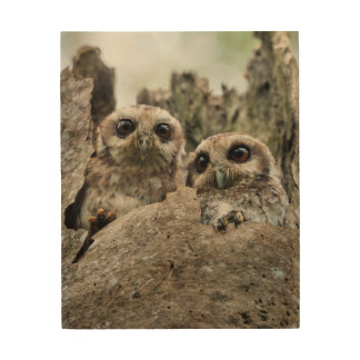 The Bare-legged Owl Or Cuban Screech Owl Wood Print