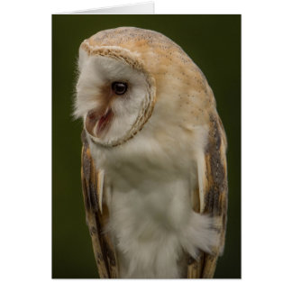 The Barn owl Card