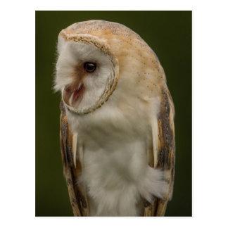 The Barn owl Postcard
