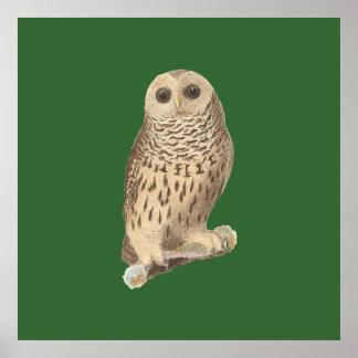 The Barred Owl(Ulula nebulosa) Posters