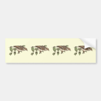 The Bay-winged Sparrow	(Fringilla graminea) Bumper Sticker