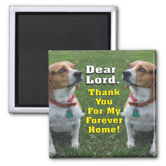 The Beagle's Prayer Magnet