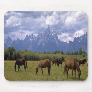 The beautiful Grand Teton Horses, having dinner,  Mouse Pad