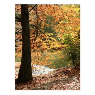 The Beauty of Autumn Postcard