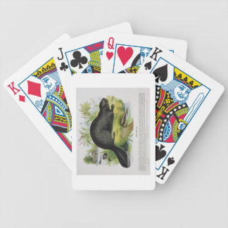 The Beaver, educational illustration pub. by the S Poker Deck