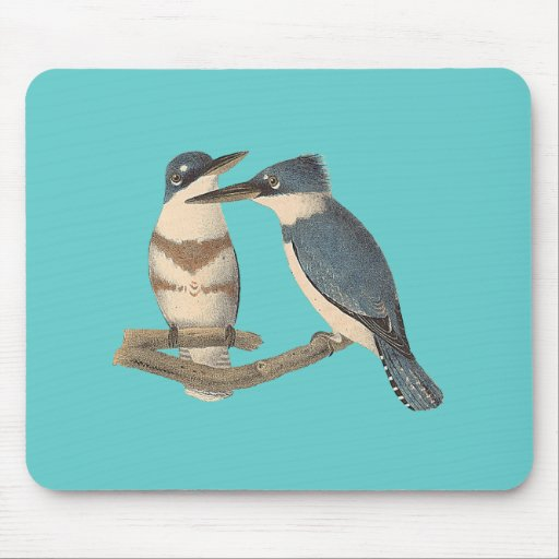 The Belted Kingfisher (Alcedo alcyon) Mousepads