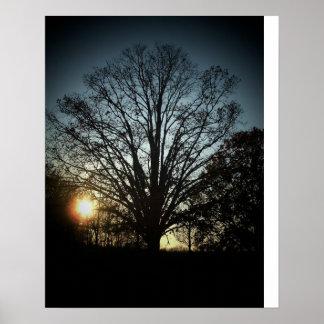 The bg Oak Tree Poster