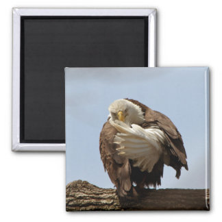 The bird giving the bird cards refrigerator magnet