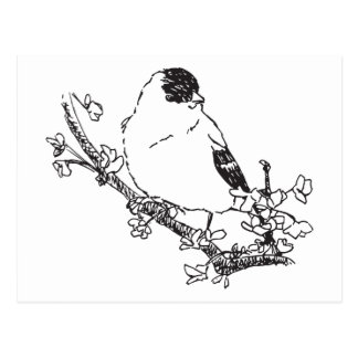 The Bird On The Branch Post Card