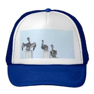 The Birds of San Ignacio Trucker Hats