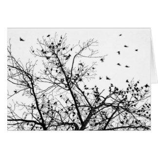 the black birds card