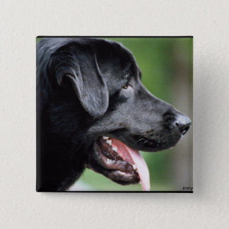 The Black Labrador 15 Cm Square Badge