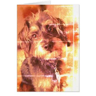 The Blank Dog Card
