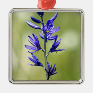 The blossom of a camas lily in Valley County, Christmas Ornament
