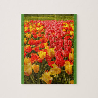 THE BLOSSOMING OF TULIPS  IN A PARK  photo puzzle