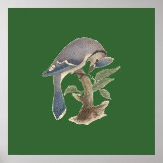 The Blue Jay(Garrulus cristatus) Print