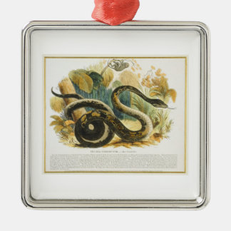 The Boa Constrictor, educational illustration pub. Christmas Ornament