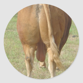 The Boss - Limousin Bull Stickers