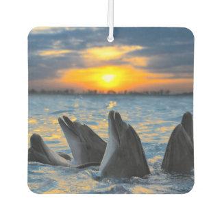 The bottle-nosed dolphins in sunset light car air freshener