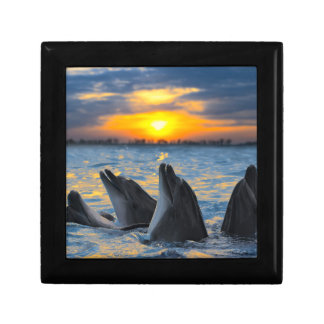 The bottle-nosed dolphins in sunset light gift box