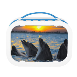 The bottle-nosed dolphins in sunset light lunch boxes