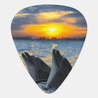 The bottle-nosed dolphins in sunset light plectrum