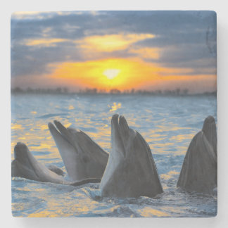 The bottle-nosed dolphins in sunset light stone coaster