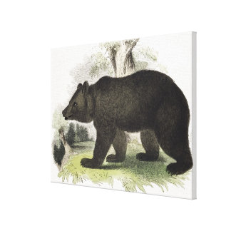 The Brown Bear, educational illustration pub. by t Canvas Print