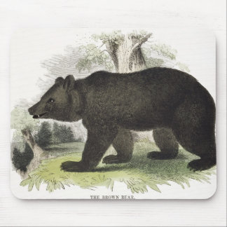 The Brown Bear, educational illustration pub. by t Mouse Mat