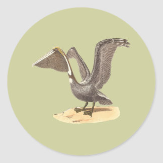 The Brown Pelican	(Pelecanus fuscus) Classic Round Sticker