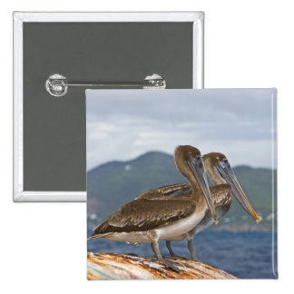 The Brown Pelican ( Pelecanus Occidentalis ) 15 Cm Square Badge