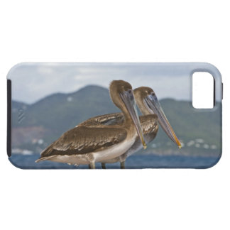 The Brown Pelican ( Pelecanus Occidentalis ) iPhone 5 Covers