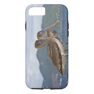 The Brown Pelican ( Pelecanus Occidentalis ) iPhone 8/7 Case