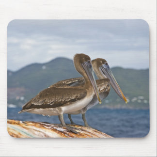The Brown Pelican ( Pelecanus Occidentalis ) Mouse Pad