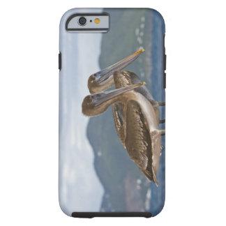 The Brown Pelican ( Pelecanus Occidentalis ) Tough iPhone 6 Case