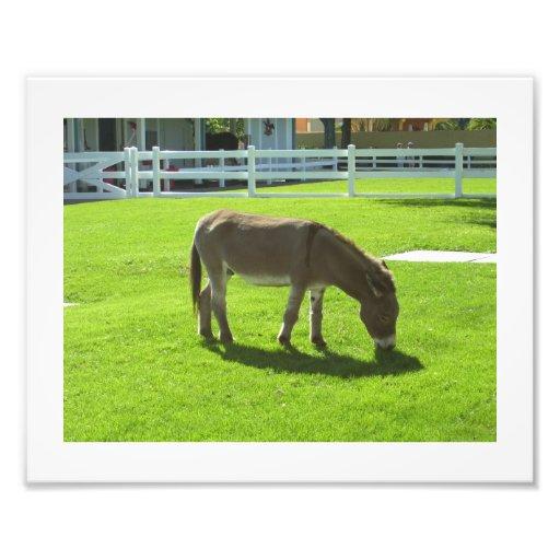 The Budweiser Donkey Photo Print
