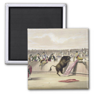 The Bull Leaping the Barriers, 1865 (colour litho) Square Magnet