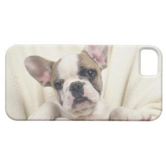 The Bulldog, often called the English Bulldog, 2 iPhone 5 Cover