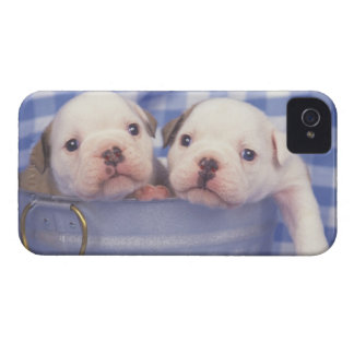 The Bulldog, often called the English Bulldog, Case-Mate iPhone 4 Cases